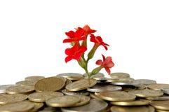 Monedas y flor, aisladas en el fondo blanco Fotografía de archivo libre de regalías