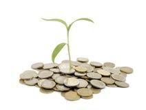 Monedas y planta imagen de archivo