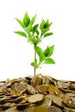 Monedas y planta Imágenes de archivo libres de regalías