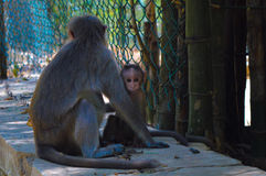 Moneky behandla som ett barn royaltyfri foto