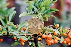 Monero coin outdoor. Digital currency physical monero coin. Cryptocurrency outdoor money concept stock image
