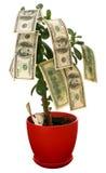monetär tree Royaltyfri Bild