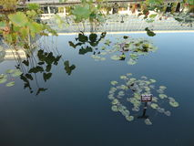 Monets Garden  Royalty Free Stock Image