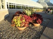Monets Garden  Royalty Free Stock Photos