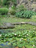 Monet's water lily gardens. Actaully Wright's water garden in New Zealand Stock Photography