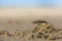 Moneta alla festa nella sabbia sulla spiaggia, Mare del Nord dell'Ucraina di affari Immagine Stock