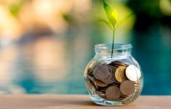 Moneta dei soldi di risparmio in pieno del porcellino di vetro Pianta che cresce nelle monete di risparmio Fotografie Stock
