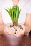 Moneta della tenuta della mano con la pianta Immagine Stock