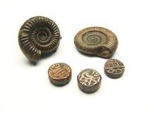 Moneta e fossile antichi Immagine Stock