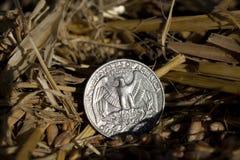 Moneta nella paglia Fotografia Stock Libera da Diritti