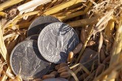 Moneta nella paglia Fotografie Stock