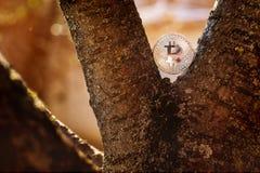 Moneta pungente d'argento nell'albero alla natura con fondo fumoso immagini stock libere da diritti