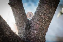 Moneta pungente d'argento nell'albero alla natura con fondo fumoso immagine stock