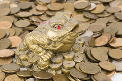 Monetary frog Royalty Free Stock Images