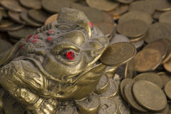 Monetary frog Stock Photography