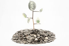 Monetary tree Stock Image