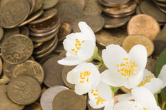Monetary tree. Royalty Free Stock Images