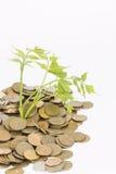 Monetary tree. Stock Images