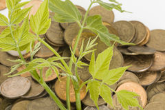 Monetary tree. Royalty Free Stock Photography