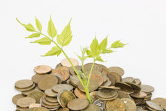 Monetary tree. Stock Photo