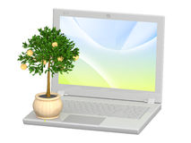Monetary tree and laptop. Isolated over white Stock Images