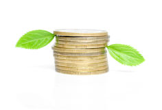 Monete con i fogli verdi Immagine Stock Libera da Diritti