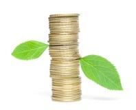 Monete con i fogli verdi Fotografia Stock Libera da Diritti