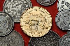 Monete del Nepal Agricoltore che ara con i bufali d'acqua Fotografie Stock Libere da Diritti