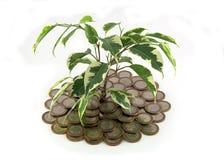 Monete dell'albero Immagine Stock Libera da Diritti