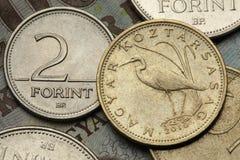 Monete dell'Ungheria fotografia stock