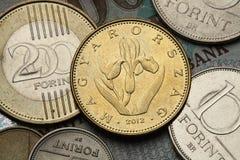 Monete dell'Ungheria Immagini Stock Libere da Diritti