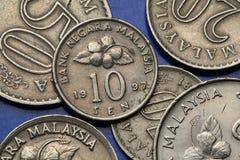 Monete della Malesia Immagini Stock