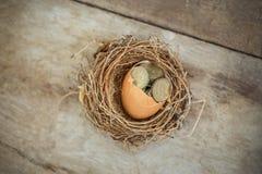 Monete di libbra britannica con il nido dell'uccello Fotografia Stock