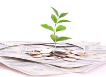 Monete, dollari e pianta isolati Fotografie Stock