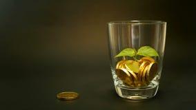 Monete dorate in barattolo di vetro e foglia verde del germoglio su fondo nero Girando, torcendo, turbinando, penny di filatura stock footage