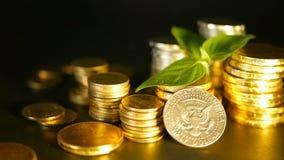 Monete dorate e foglia verde del germoglio su fondo nero Successo dell'affare di finanza, dell'ipoteca e dei concetti di attività archivi video