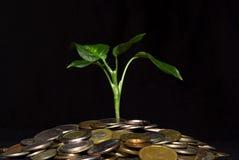 Monete e pianta Immagine Stock