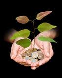 monety target1810_1_ palowego ręki drzewa Obrazy Royalty Free