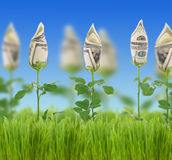 Money. Beautiful Concept image of a Financial Growth royalty free stock image