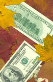 Money. The American money for a background of autumn leaves Royalty Free Stock Photos