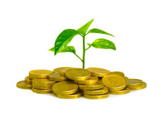 Free Money And Plant Royalty Free Stock Image - 19533576