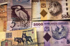 Money with Animal pictures Stock Images