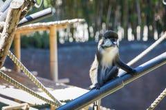 Money. Animal in San Diego Zoo Stock Photography