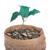 Money bag with coins and money tree isolated at a white background Royalty Free Stock Images