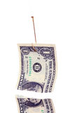 Money bait. Torn Dollar Bill Hanging From a Fish Hook, isolated on white ground. Conceptual for loan sharking, predatory lending, baited deals, financing, etc stock images