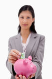 Money being put into piggy bank by businesswoman. Against a white background Stock Photos