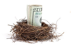 Money in bird's nest Stock Photos