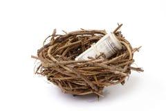 Money in bird's nest Royalty Free Stock Photo