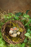 Money in bird's nest Royalty Free Stock Photos