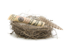 Money in the bird's nest on a white background Stock Photos